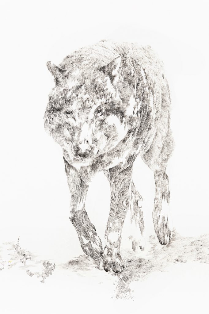 Detail Wolf, 2015, Aquarell auf Papier, 114 × 210 cm