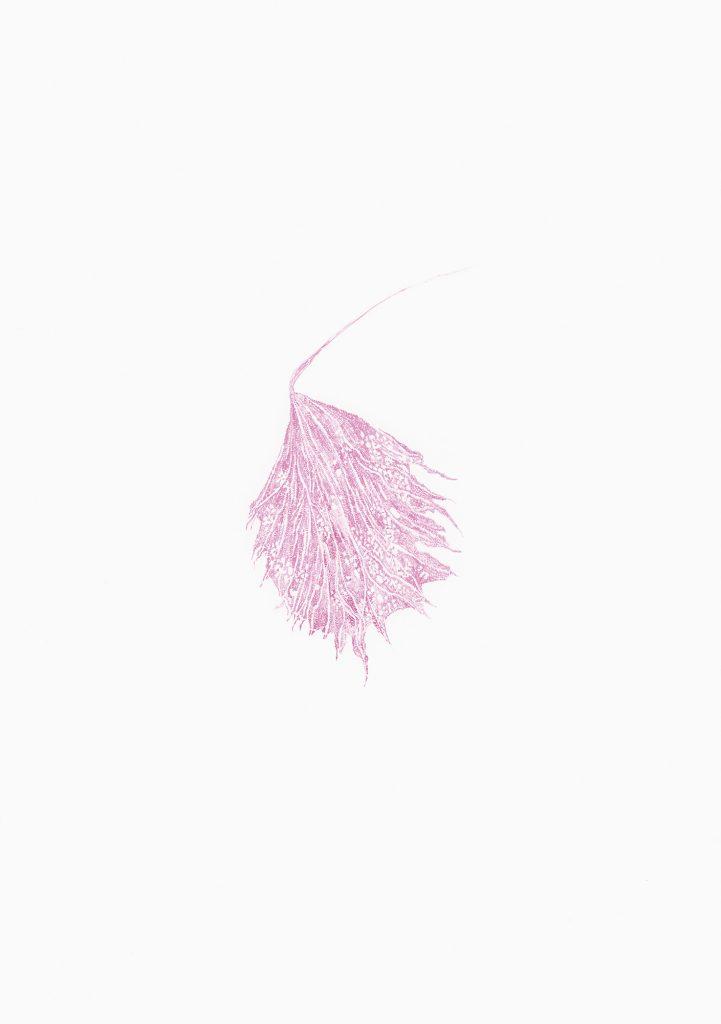 Aus der Serie Kooperationen, Flechten: Alge und Pilz, 2018, Aquarell auf Papier, je 40 × 30 cm