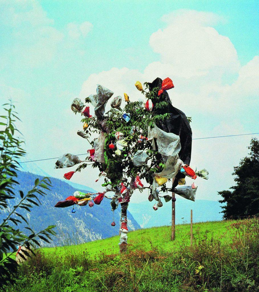 Lois Weinberger, Baumfest (Stams, Juli - September 1977), Kirschbaum, Plastiksäcke-und Planen,  Foto: (c) Studio Weinberger, Galerie Krinzinger, Wien